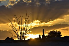 Another cool sunset (thomasgorman1) Tags: nikon sun sundown ocotillo scenic desert baja mx mexico cactus tree clouds