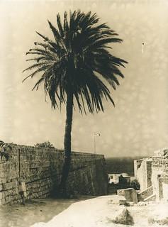 Palm in Kyrenia Castle