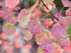 Autumn Colors (docwiththecamera) Tags: red autumn colors leaf tree bokeh moisture drop water
