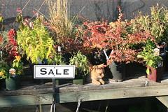 IMG_6641 (willsonworld) Tags: willamette valley wine tasting cat grapes 2014