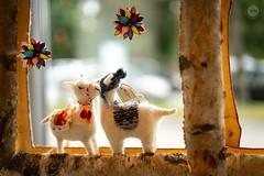 Comfort (dlerps) Tags: carlzeiss carlzeissplanar50mmf14ssm de daniellerps deutschland germany lerps lübeck norddeutschland northerngermany schleswigholstein sony sonyalpha sonyalpha99ii sonyalphaa99ii lerpsphotography lama softtoys toys store shop couple love cute lamb sheep