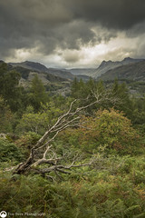 Resting Place (tdove77) Tags: cumbria lakedistrict sonya7ii tree langdalepikes coniston holmefell