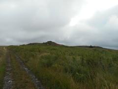 DSCN5618 (norwin_galdiar) Tags: bretagne brittany breizh finistere monts darrée nature landscape paysage