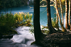 Leaving and Staying (Marta Marcato) Tags: trees roots water flow river motionblur motion nature silk silkeffect silkywater plitvice plitvicenationalpark croatia nikond7200 light sun blue flowers