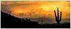 Painted Sky (Ken Mickel) Tags: arizona buckeye clouds cloudscape cloudy desert kenmickelphotography landscape landscapedesert outdoors skylineregionalpark sunsets nature photography sunset unitedstates us