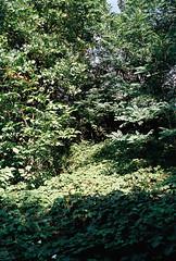 (kotmariusz) Tags: light trees suburbs analog 35mm filmphotography olympusom40 fujisuperia400 poland świdnica outskirts color