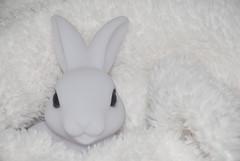 """""""smile on saturday"""" - """"white on white""""!!! (FMAG) Tags: smileonsaturday whiteonwhite rabbit whiterabbit"""