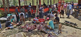 INDONESIEN, Sulawesi -  Traditional funeral of Toraja. Another component of the ritual is the slaughter of water buffalo.   17635/10646