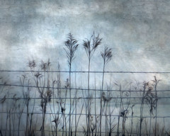 Fenced in Blues (David DeCamp) Tags: field fog winter weeds blue texture topazimpression2