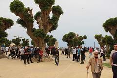 Tipasa, Park and ruins (Buster&Bubby) Tags: romanruins mediterranean tipasa unesco unescoworldheritagesite algeria algérie