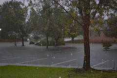 Raining Hard. (dccradio) Tags: lumberton nc northcarolina robesoncounty outdoor outdoors saturday evening latesummer earlyfall earlyautumn september tree trees foliage greenery leaf leaves treebranch branch branches treebranches parking parkinglot paved pavement flooding hurricane florence hurricaneflorence storm rain raining rainy flood floods weather weatherevent nature natural sky cloudy overcast lines paintedlines standingwater water bodyofwater floodwater nikon d40 dslr shrub bushes