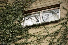 One hour with a macro (Helen C Photography) Tags: macro nikon 105mm adelaide southaustralia sa nature plants house ivy creeper reflection window old