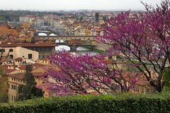 City panorama, with blossoms, Florence (edk7) Tags: nikoncoolpix4500 edk7 2004 italia italy tuscany florence toscana firenze pontevecchio church belltower campanile architecture building oldstructure edifice city urban cityscape panorama unescoworldheritagesite window sky cloud tree blossom flower river arno bridge hedge centrostorico