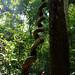 Virachey National Park, Rattanakiri