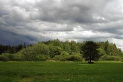Äike tulekul (Jaan Keinaste) Tags: pentax k3 pentaxk3 eesti estonia viljandimaa tipuküla soomaa maastik landscape