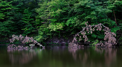 Simple contrast (Christopher W Gilbert) Tags: fujifilm fuji xseries gfx50s landscape landscapes ohio delaware longexposure trees deadtree minimal minimalism