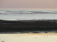 Soir d ' été ...Summer evening ... (Armelle85) Tags: extérieur paysage nature mer océan bouchots eau crépuscule soir silhouette lac lagune