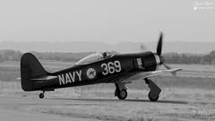 F-AZXL / 250 - Hawker Fury FB.10 (Laurent Quérité) Tags: fazxl hawker fury fb10 noirblanc monochrome blackwhite meetingaérien airshow aviation aéronef avignoncaumont france canonfrance canoneos7d canonef100400mmf4556lisusm frédéricakary seafury