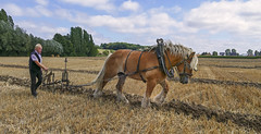Plowing (JLM62380) Tags: plowing labourage houlle plowman laboureur horse field cheval champ charrue plow france rural