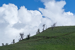 sentrees: feeling small (RubyT (I come here for cameraderie!)) Tags: bighornnationalforest olympusomde10ii m75300 mountain clouds landscape steamboatrock highway14
