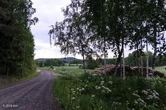 Kylätie (nousku) Tags: mmp suomi sysmä finland flowerstrees landscapes