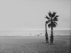 playa (Antonio GB) Tags: hasselblad503cx planar8028cf ilfordhp5 kodakhc110 standdevelopment desatendido playa beach elcampello carrete formatomedio mediumformat 6x45