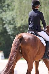 _MG_9657 (dreiwn) Tags: dressurprüfung dressurreiten dressurpferd ridingarena reitturnier reiten reitplatz reitverein reitsport ridingclub equestrian horse horseback horseriding horseshow pferdesport pferd pony pferde tamronsp70200f28divcusd dressur dressuur dressyr dressage