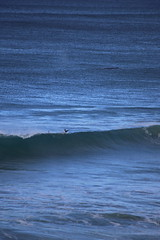 IMG_3641 (gervo1865_2 - LJ Gervasoni) Tags: surfing with whales lady bay warrnambool victoria 2017 ocean sea water waves coast coastal marine wildlife sealife blue photographerljgervasoni