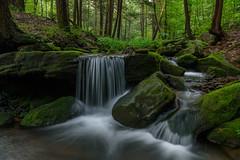 Mill Creek (clare j kaczmarek) Tags: laurelhighlands millcreek moss summer mountainstreams