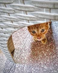متوجس خيفة (Tarek Ezzat) Tags: قط شارع حيوان نادي هليوليدو مصر الجديدة القاهرة cat heliolido street pet club