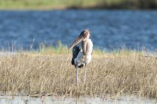 2018_Chobe_River,_Botswana-11