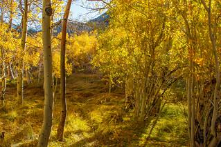 Fall 2017 Bishop Creek  9460