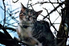 Cat (jvstynakovalczyk) Tags: sky eyes pet greeneyes nikon nikond3100 cat tree