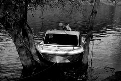Belesar (albavv46) Tags: ship little black white filter blackandwhite blanco negro bw light river water tree arbol agua rio galicia autumn lancha barco shadow sombra sombras contrast canon canonphotography camera