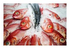 _K001599 (Jordane Prestrot) Tags: ♍ jordaneprestrot tenerife candelaria poisson pescado fish naturemorte stilllife naturalezamuerta