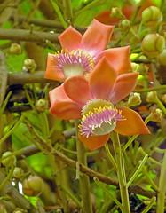 Another Strange Flower! (Cornishcarolin. Stupid busy!! xx) Tags: cornwall httpswwwedenprojectcom nature flowers plants