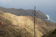 Vallehermoso (coastwalker) Tags: eden lagomera landschaft nature vallehermosa landscape agave