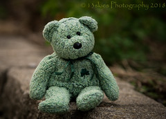 Sitting Outside (HTBT) (13skies) Tags: outside ledge summer flowers green fun wave outdoors teddybeartuesday greenbear gerrie time playing play htbt happyteddybeartuesday
