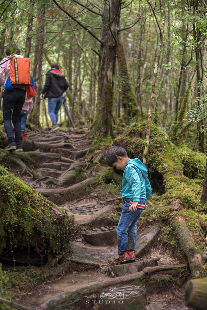 太平山翠峰湖環山步道 |走在泥濘的道路上,只為途中美景 | 宜蘭大同鄉45