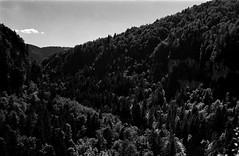 Vallée de la mort (hugobny) Tags: caffenol cl stand ilford fp4 p30 pentax pentaxp30 pentaxlens smc 50mm f17 epsonv600 epson 35mm film blackwhite jura doubs vallée de la mort