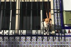 Behind Bars (farahleon) Tags: littledog ratonero sabinillas tiles bars behindbars