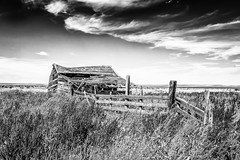 Broadview, Montana (paccode) Tags: grass shack landscape bushes brush serious quiet clouds solemn home summer abandoned barn monochrome fence scary house farm d850 creepy montana forgotten blackwhite field broadview unitedstates us