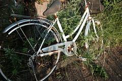 Oblivion (marodacco) Tags: fujifilmx70 fujifilm x70 landscape japan bike bicycle old rust