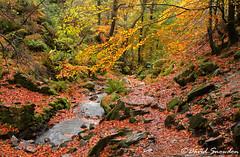 Autumn Colour (Dave Snowdon (Wipeout Dave)) Tags: davidsnowdonphotography canoneos1100d landscape lakedistrict lakedistrictnationalpark lakeland autumn fall stream trees leaves