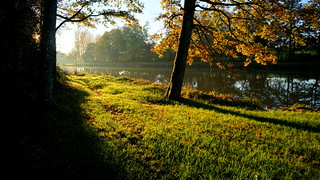 Au bord de l'étang