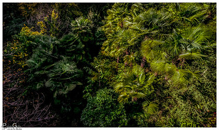Palmen Dschungel / Palm trees jungle