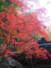 a (43) (hiromi89) Tags: japan beauty beautiful scenery flower wood pond