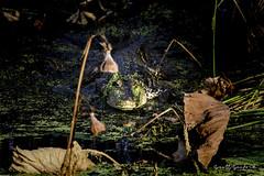 Anahuac NWR.20180825.066-Edit (Scott Sanford Photography) Tags: 80d anahuacnationalwildliferefuge canon ef14xiii ef100400mmf4556lii eos gulfcoast naturalbeauty naturallight nature outdoor summer texas water wildlife alligator birds reptile