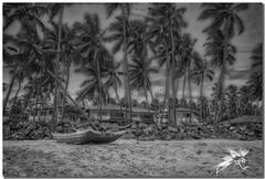 Negombo Beach - Sri Lanka (UfoSp@in ஐ★Freelance Photo★ஐ) Tags: negombo india ශ්රී ලංකා ප්රජාතාන්ත්රික සමාජවාදී ජනරජය lankadvīpa ceilán la lágrima de bandaranaike நீர்கொழும்பு tamil gampaha occidental canon eos m50 view vacancy velocity art apple af sky sol zoom colores colors viento beatiful bokeh belleza beach night neon nubes clouds best myself mac macbookpro macbook love live light lightroom lugares landscape lens landscapes l photo photography photoshop photomatrix instagram iso infinity ufospin usm travel texture playa arena stone srilanka marindico palmeras