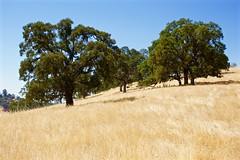 DSC_1765-a41 (stumbleon) Tags: nikondslr nikond7200 amadorcountycalifornia landscape trees california rural countryroads grassland rollinghills